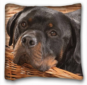 My Honey Pillow Pillow Cover dog dog rottweiler 46cm *18 Twin Sides by My Honey Pillow