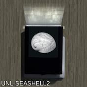 Seashell 2-2