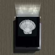 Seashell-2