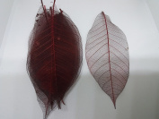100x Red Natural Skeleton Leaves Rubber Tree Scrapbook Craft Wedding Decor