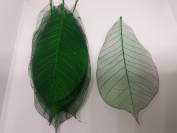 100x Green Natural Skeleton Leaves Rubber Tree Scrapbook Craft Wedding Decor
