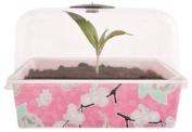 Square Propogator With Lid. Cherry Blossom Design. 22 X 17 X 15cm