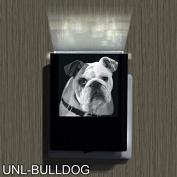 Bulldog-2