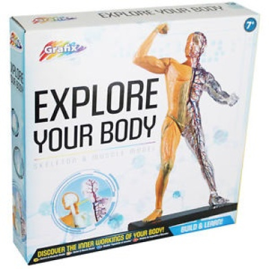Human Anatomy Model - Assorted, Toys & Games,