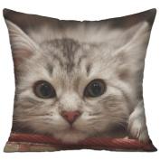 Beautiful Cat Cat Muzzle Fluffy Designer Sofa Pillows 46cm X 46cm