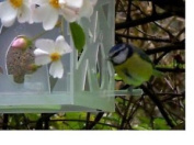 Flock-follies Limited Edition Bird Feeder - Clear Frost Pack