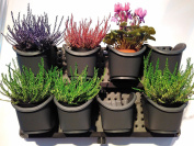 Vertical Garden Green Wall, Expandable Plant Growing Kit Irrigation To All Pots