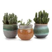 T4u 7cm Ceramic Summer Trio Sucuulent Plant Pot/cactus Plant Pot Flower Green 1