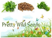 Coriander - Herb - 100g Seeds For Growing Fresh Uk Seed