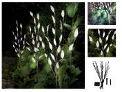 Ornamental Branch Tree Leaf Solar Powered Outdoor Garden Led Lights Bright Night