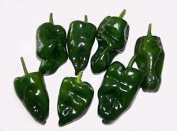 Premier Seeds Direct Pepper Hot Poblano Includes 100 Seeds