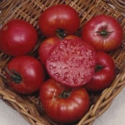 Premier Seeds Direct Tomato Mortgage Lifter Includes 120 Seeds