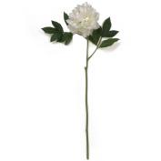 70cm Peony Stem White
