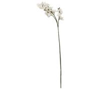 110cm White Orchid Stem