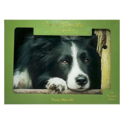 Country Matters Chilled Out Collie Glass Work Top Saver