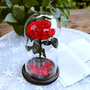 DeFancy Preserved Real Rose with Fallen Petals in Glass Cloche Dome with Black Wood Base-Best Gift Jar