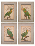 Parrot And Palm Iiiiiiiv - Fine Art Giclee Under Glass