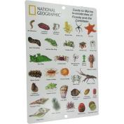 National Geographic Snorkeler Fish ID Card, Caribbean and Florida Marine Invertebrates