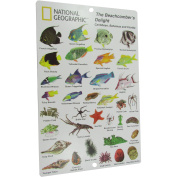 National Geographic Snorkeler Fish ID Card, Beach Combers Delight, Caribbean, Bahamas and Florida