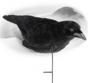 Expedite International Edge Flocked Crow Decoys