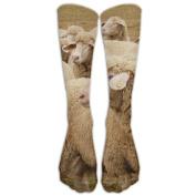 A Group Of Lovely Sheep Athletic Tube Stockings Women's Men's Classics Knee High Socks Sport Long Sock One Size