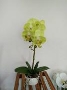 Phaleanopsis Arrangement with Vase Decorative Artificial Orchid Flower Bonsai