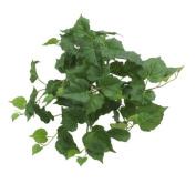 Renaissance 2000 Decorative Cottonwood Leaf Bush, 33cm , Fern Green
