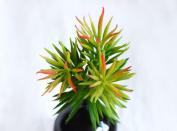 8 Capensia Bush, Artificial Plant by StarPlants