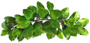 90cm Magnolia Leaf Swag