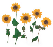 Pressed flowers Sunflower 10pcs for floral art, craft, scrapbooking