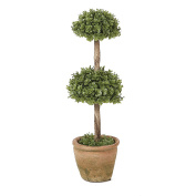 Orchid Double Treetop Topiary 33cm H