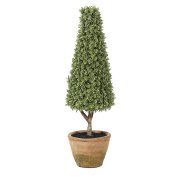 Winsome House Orchid Tree Topiary, 50cm H
