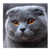 Fineser(TM) DIY Diamond painting Cross Stitch 5D Embroidery Paintings Rhinestone Pasted Grey Cat B