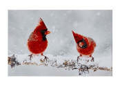 Cardinals in Winter LED Canvas Print — Lighted Picture of Birds on a Lighted Branch — Wall Art with Battery Operated LED Lights