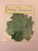 Colorbok Leaves 12 Accent Photo Graphics for scrap booking