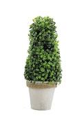 Renaissance 2000 60cm Green Boxwood Cone Topiary