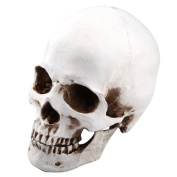 1:1 Life Size Model Resin Human Anatomy Head Skull Replica Medical Teaching Tool Halloween Decor