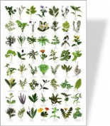 Garden HERBS Poster - 56 HERB images