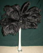 Special Sale OSTRICH Feathers Wholesale Bulk 2.2cm long DELUXE Tail Feathers BLACK Qty 25 for Eiffel Towers by Six Star Sales