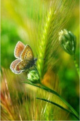 5D DIY Diamond Painting,NACOLA Rhinestone Pictures Of Crystals Embroidery Kits Arts Crafts & Sewing Cross Stitch-Butterfly