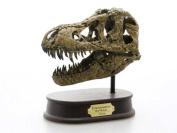 Dinosaurs Tyrannosaurus Rex skull FDS-651