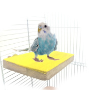 Colourful Bird Perch Stand Platform Playground, Natural Wood Paw Grinding Clean for Pet Parrot Macaw African Greys Budgies Parakeet Conure Hamster Gerbil Rat Mouse Cage Accessories Exercise Toy