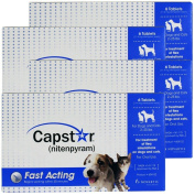 4 PACK CAPSTAR Blue for Dogs or Cats 0.9-11kg