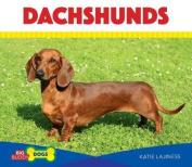 Dachshunds (Big Buddy Dogs)