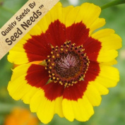 Package of 1000Seeds, Coreopsis Plains (Coreopsis tinctoria) Open Pollinated Seeds By Seed Needs