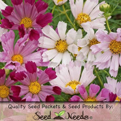 "Package of 400 Seeds, Cosmos ""Seashells Mixture"" (Cosmos bipinnatus) Open Pollinated Seeds by Seed Needs"