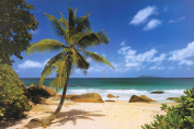 Palm Beach (Tropical Landscape Photo) Art Poster Print Poster - 36x24