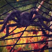 Halloween Decorations, Hip2cart 3m Spider Web Decorations and Giant Spider Decorations Outdoor Indoor