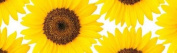 Duck Tape Duct Tape, 48 mm Wide x 9.1 Metres Length, Sunflower