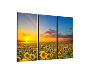 3-Piece Wall Picture on canvas and stretcher frame ready to hang – Our Sunflower Field Picture on canvas and Feature [Ready to Detailed Print up to 100 Megapixels.